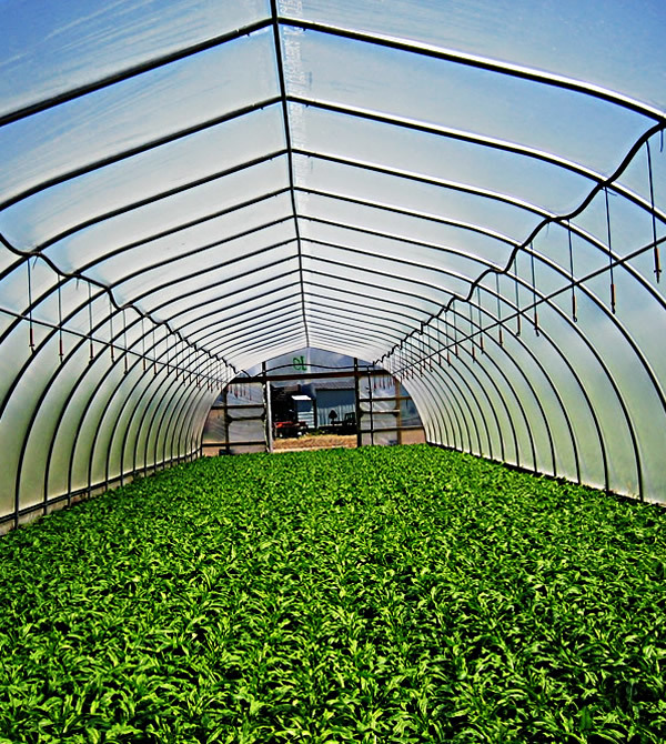 Agriculture materials